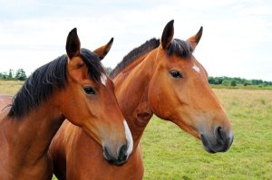 horse reunion tw 26716