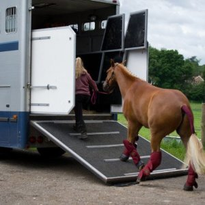 horse trav in the heat tw 20716