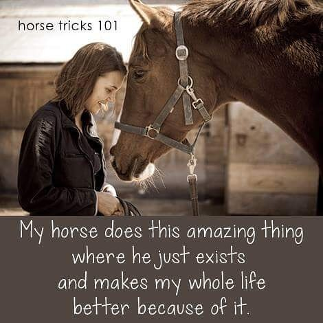 horse does one thing tw 4816