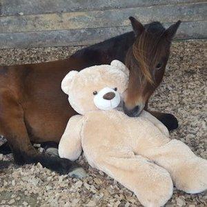 foal-teddy-tw-221016