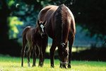 top-tips-for-feeding-weanling-foals-teaser-image