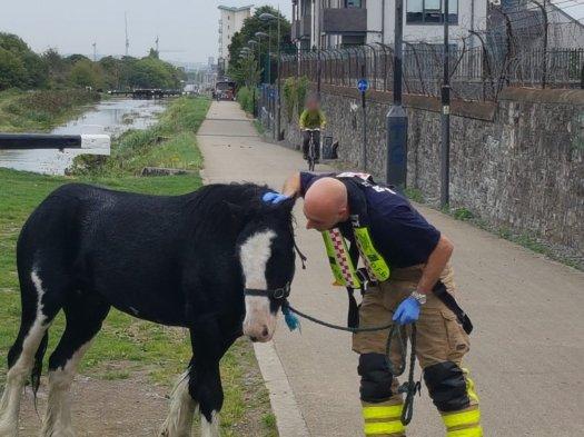 fire brigade bluebell