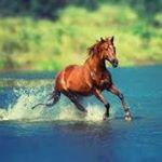 horse4479's profile picture