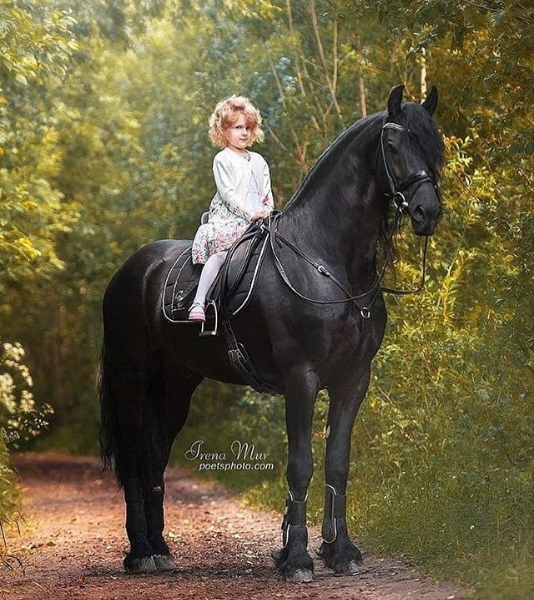 Screenshot_2019-10-09 #horsegirl hashtag on Instagram • Photos and Videos.png