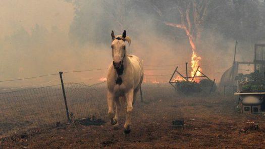 h& h australia firestorm