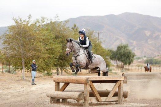 us equestrian connemaras